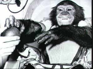 El chimpanc� Ham viaj� en la MR-2 (Foto: NASA)